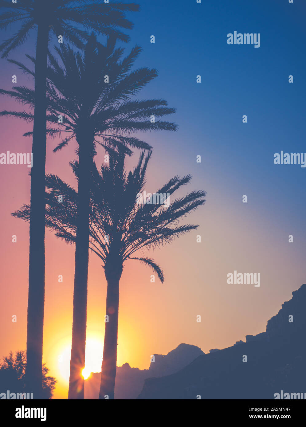 The Sun Behind Palm Trees And Mountains During A Tropical Sunset In Hawaii Stock Photo