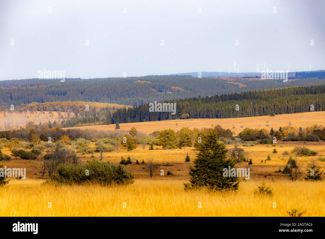 Belgium, Wallonia, the High Fens, high moor, in the Eifel and Ardennes region, High Fens Eifel Nature Park, northeast of Baraque Michel, overview, Stock Photo