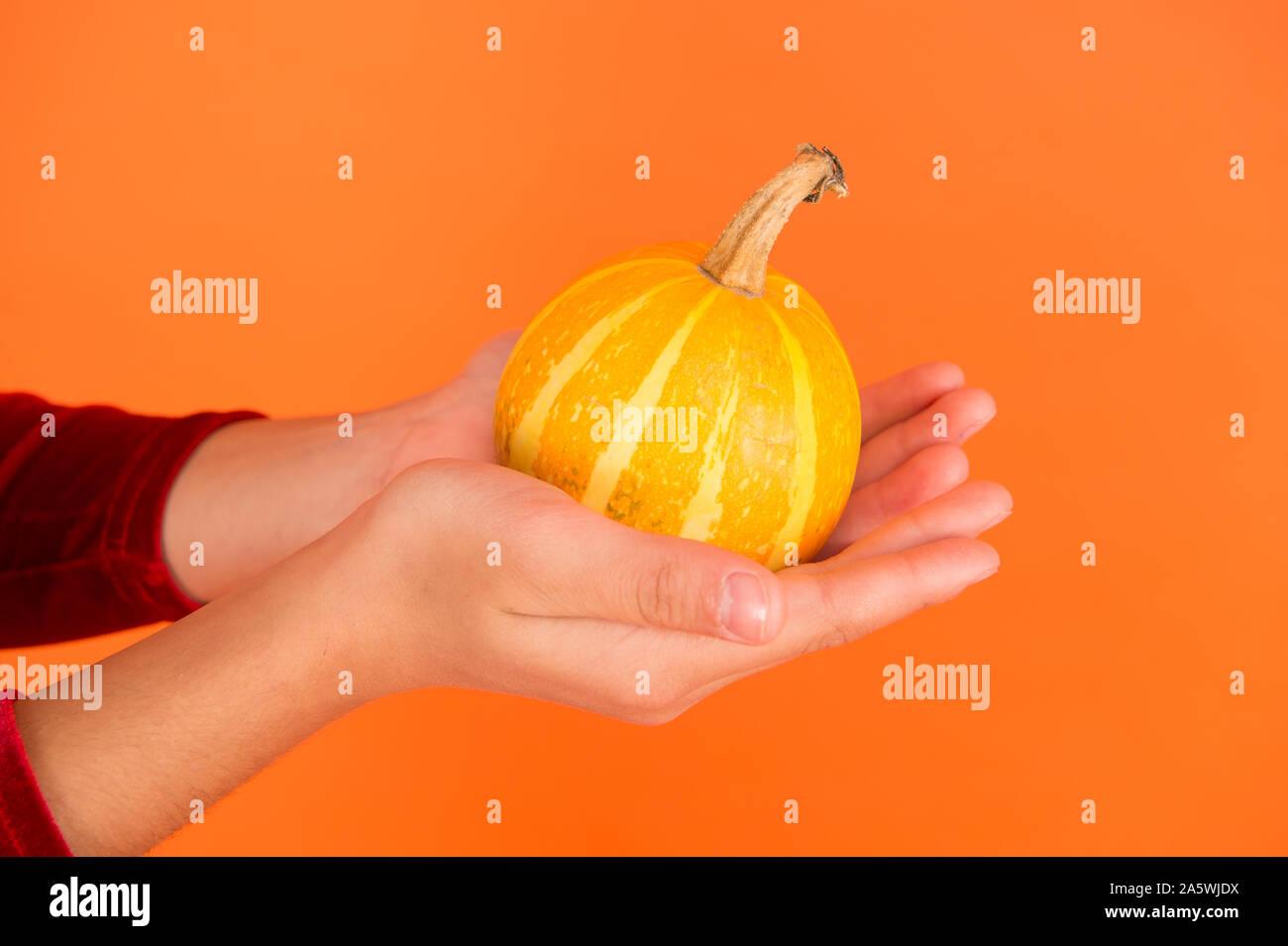 Time To Carve Out The Pumpkin Pumpkin In Hands Orange Background Small Pumpkin Halloween Pumpkin Jack O Lantern Holiday Celebration Stock Photo Alamy