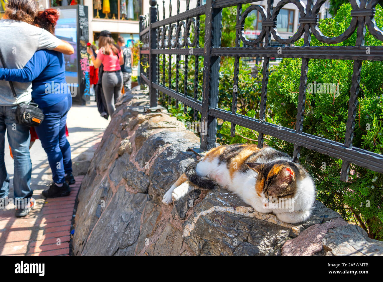 A calico cat sleeps on a rocky gated wall as tourists enjoy a sunny day in the Galata district of Istanbul, Turkey Stock Photo