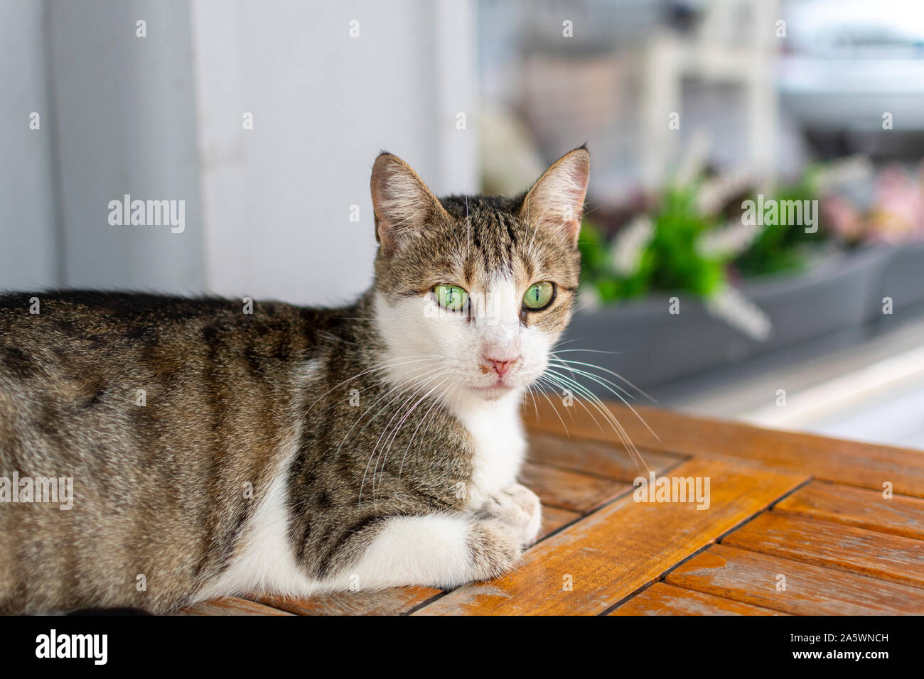 A stray tabby cat with  brilliant green eyes sits on a cafe table outside a restaurant in Istanbul, Turkey. Stock Photo