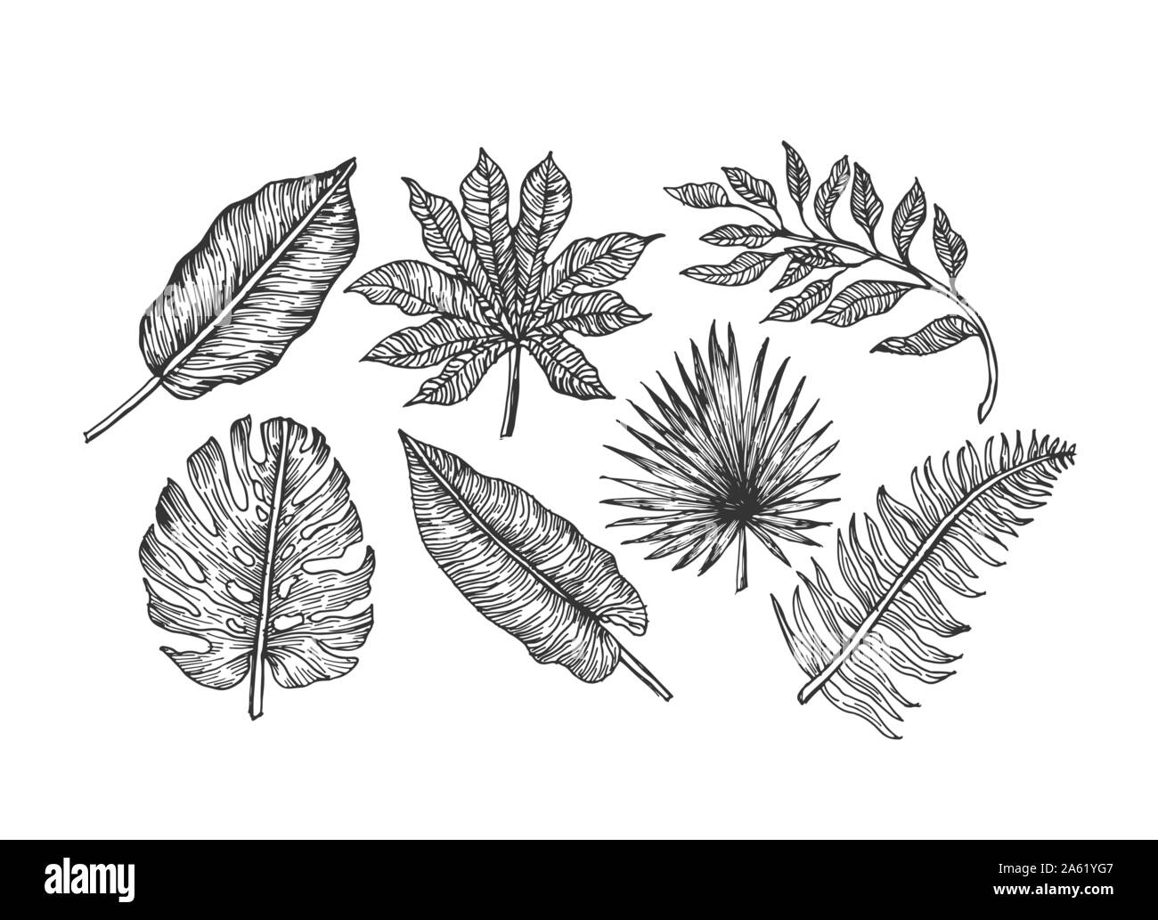 Tropical Leaves Collection Engraved Jungle Leaves Set Palm Leaves Vector Illustration Stock Vector Image Art Alamy Tropical monstera palm beach leaves flat style design elements. https www alamy com tropical leaves collection engraved jungle leaves set palm leaves vector illustration image330728503 html