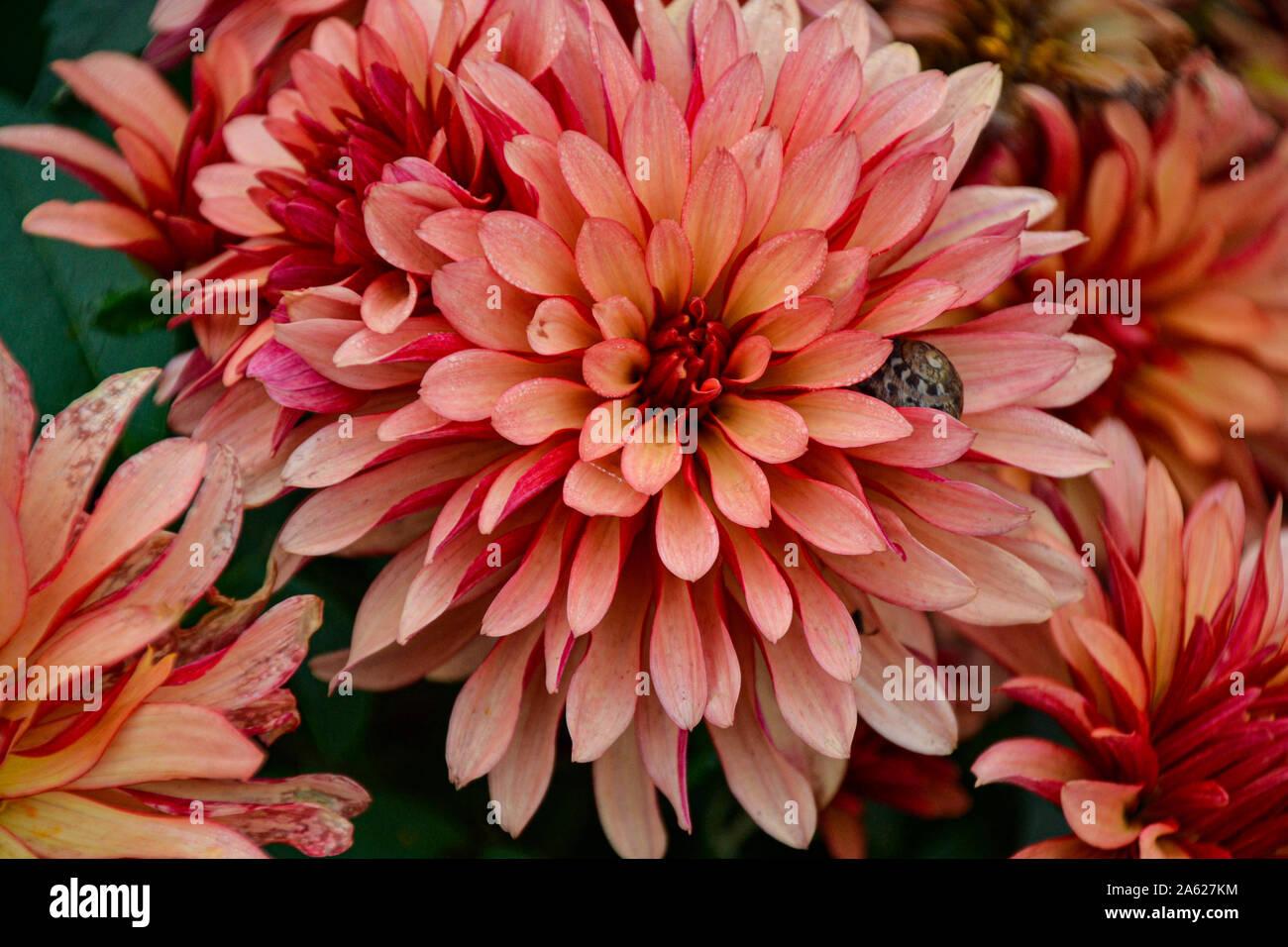 Blumen im blühenden Barock zur Kürbisausstellung / Herbstblumen / Herbstdekoration / Flowers in blooming Baroque for pumpkin exhibition / autumn flowe Stock Photo