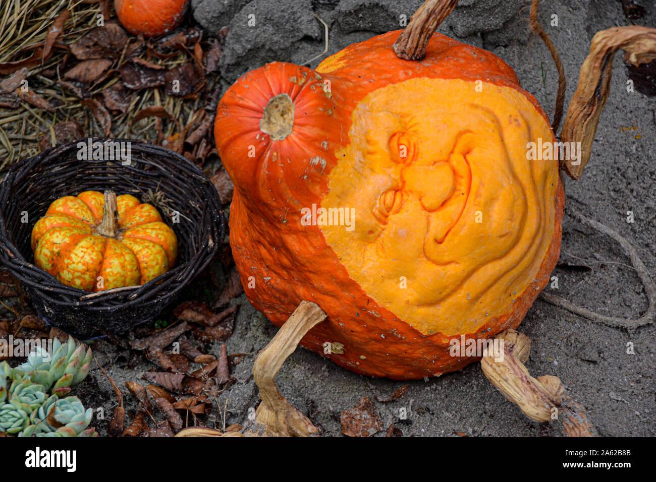 Grusel Kurbis Halloween.Halloween Kurbis Gruseliger Kurbis Halloween Dekoration Herbstdekoration Kurbis Schnitzen Schnitzerei Kurbisgesicht Stock Photo Alamy