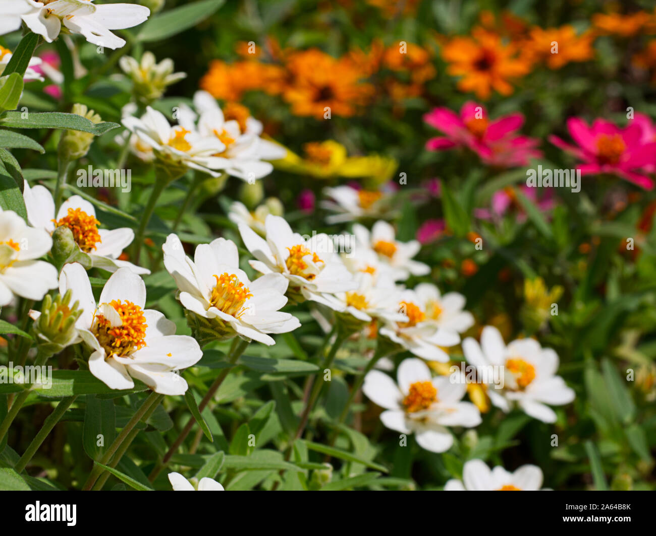 Fall Landscaping Ideas Stock Photos Fall Landscaping Ideas Stock