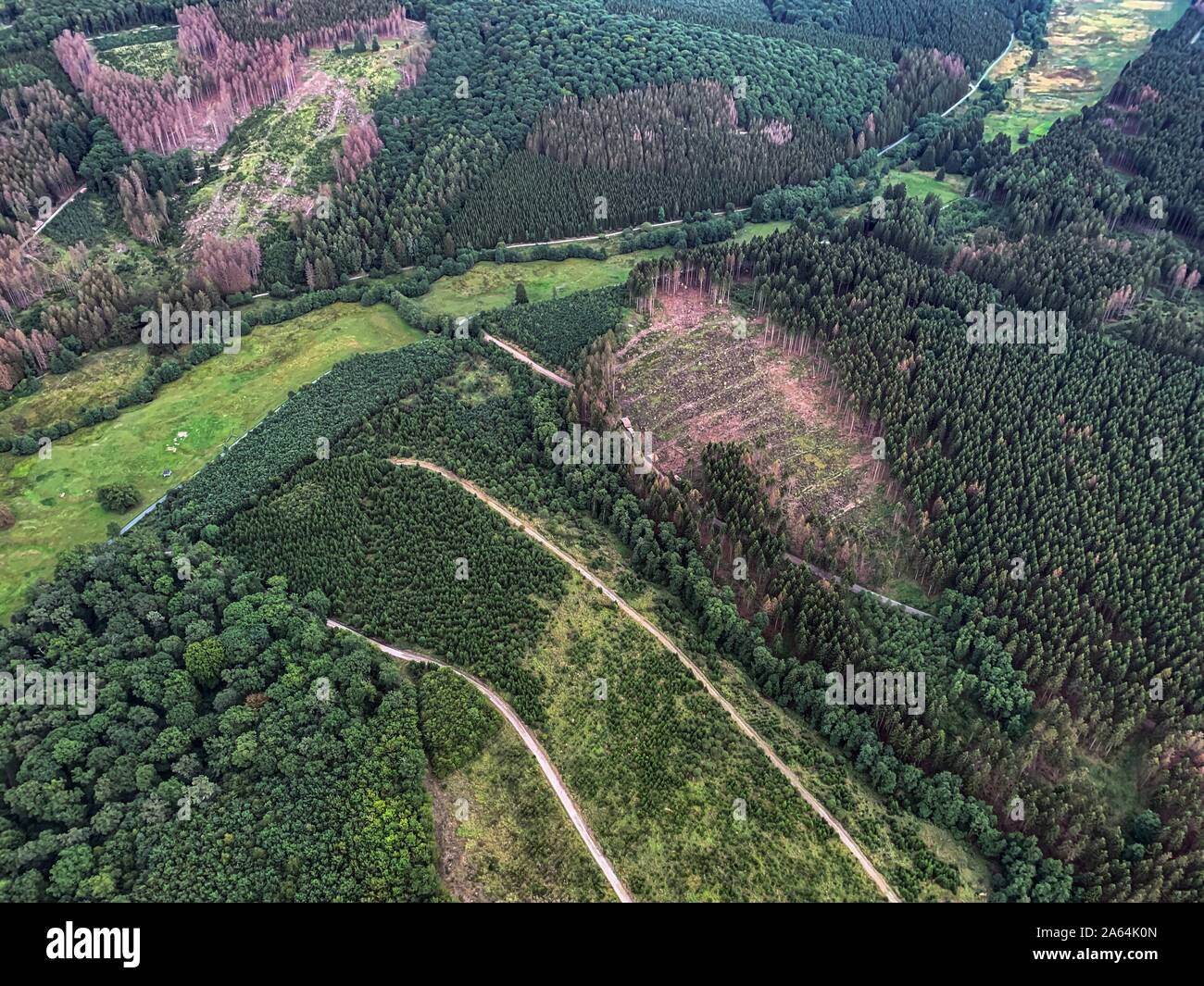 Forest damage in the Arnsberger Wald nature park Park, Sauerland, near Warstein, Germany Stock Photo