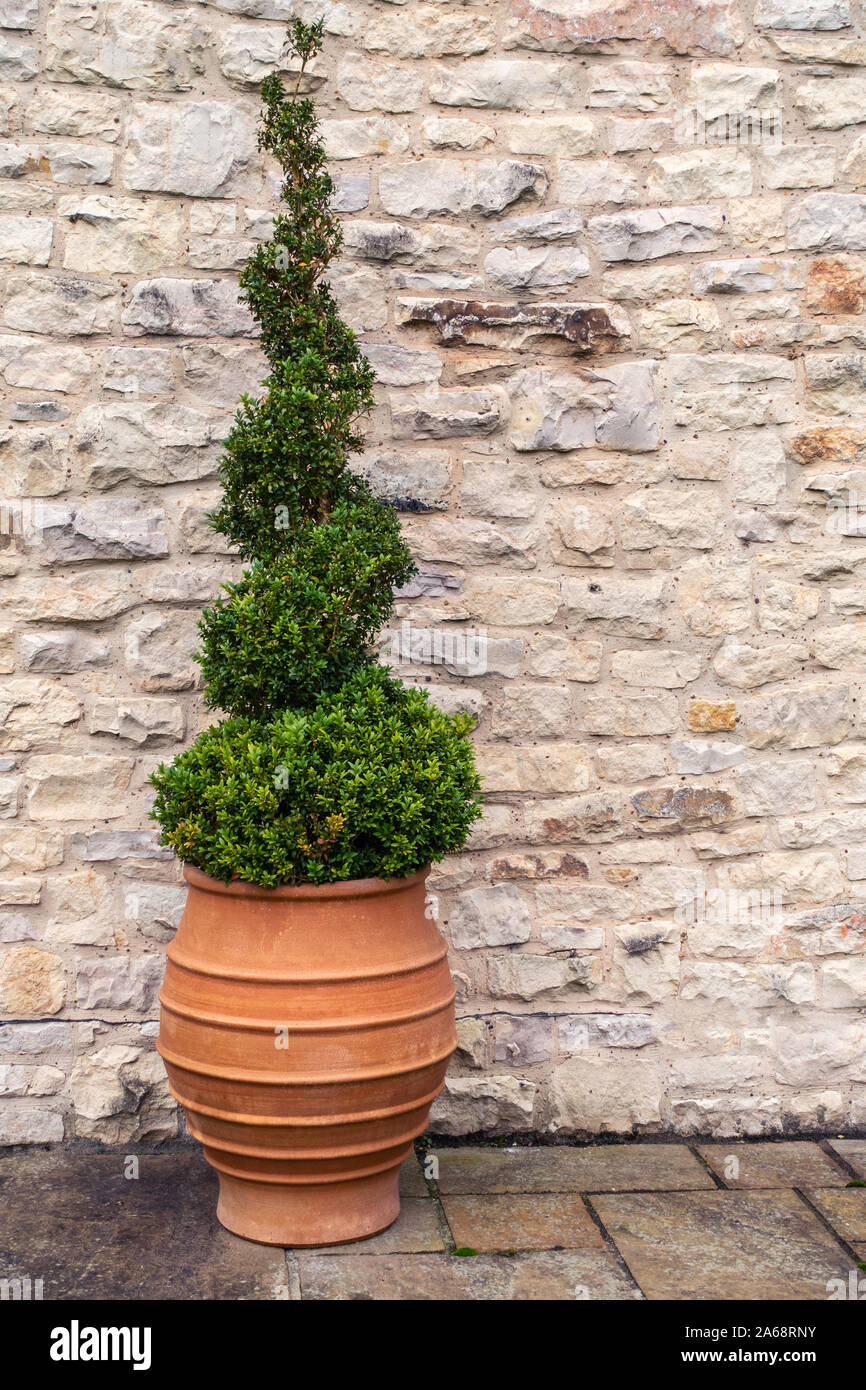 Topiary Pot High Resolution Stock Photography And Images Alamy
