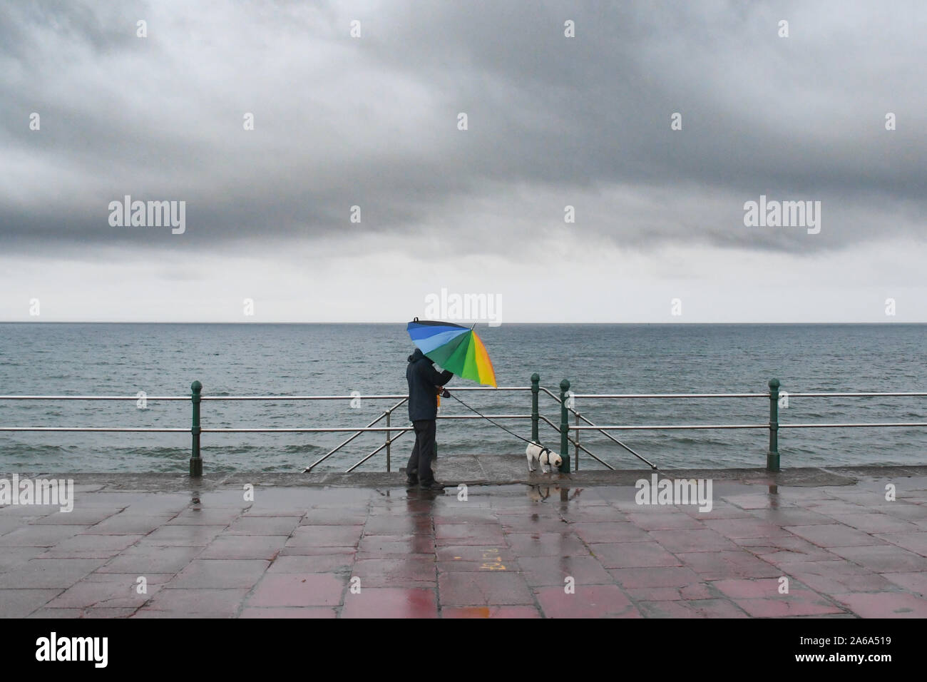 Man walking dog on windy seafront wearing coat and holding a colourful umbrella. Stock Photo