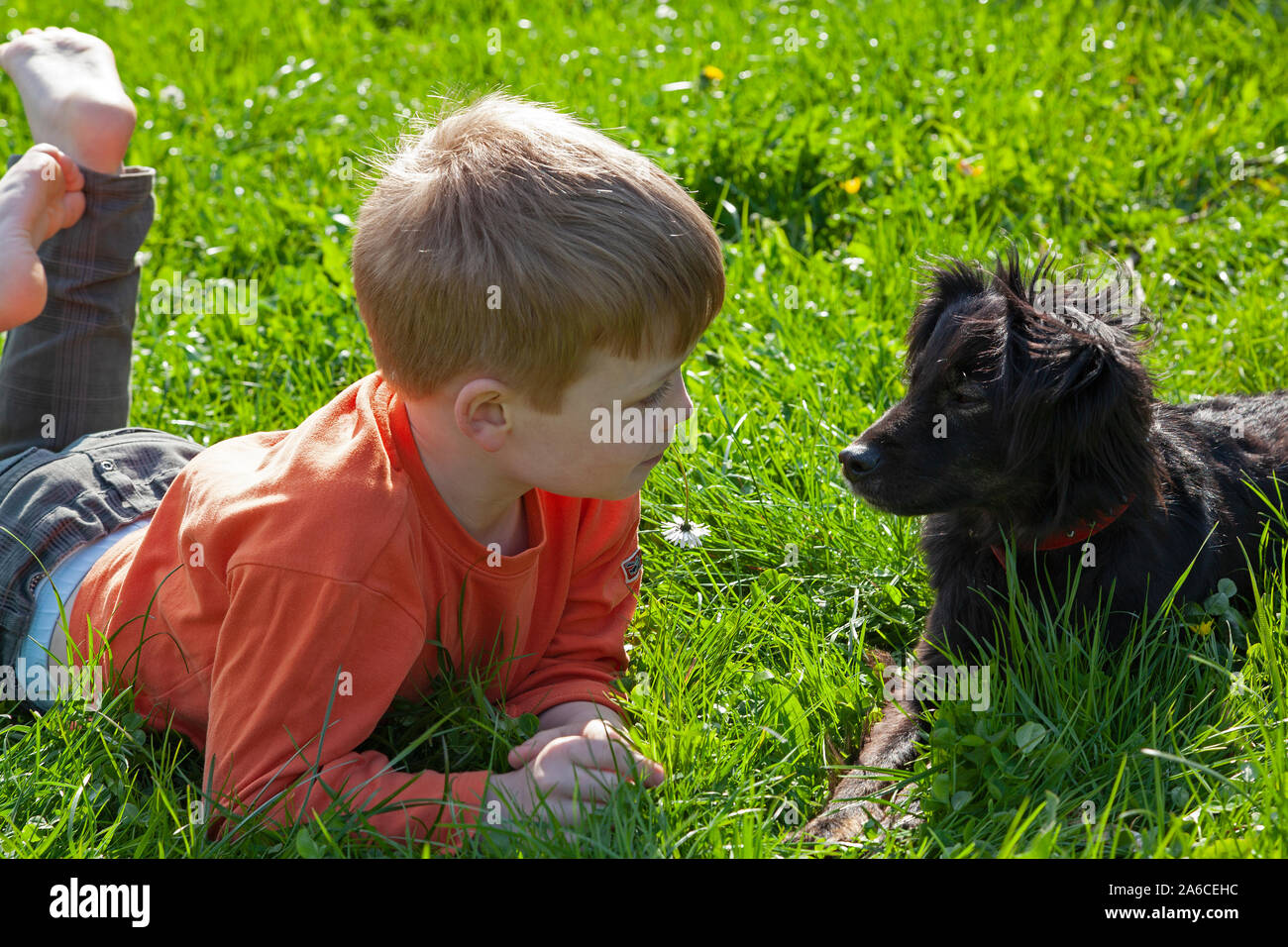 Portrait of a young boy and his dog. Stock Photo