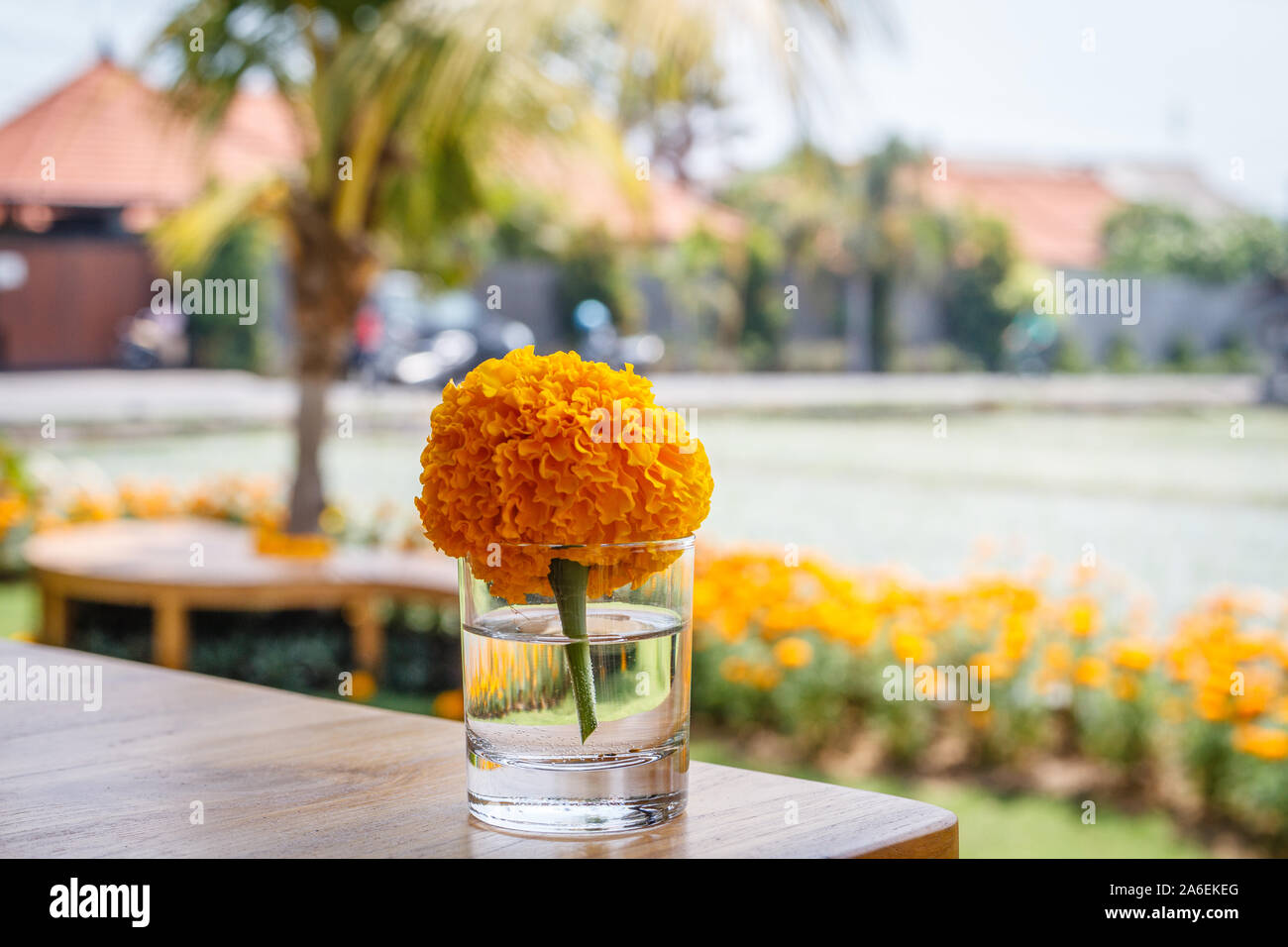 Marigold flower in a small glass on a wooden table in a cafe. Natural background.  With space. Stock Photo