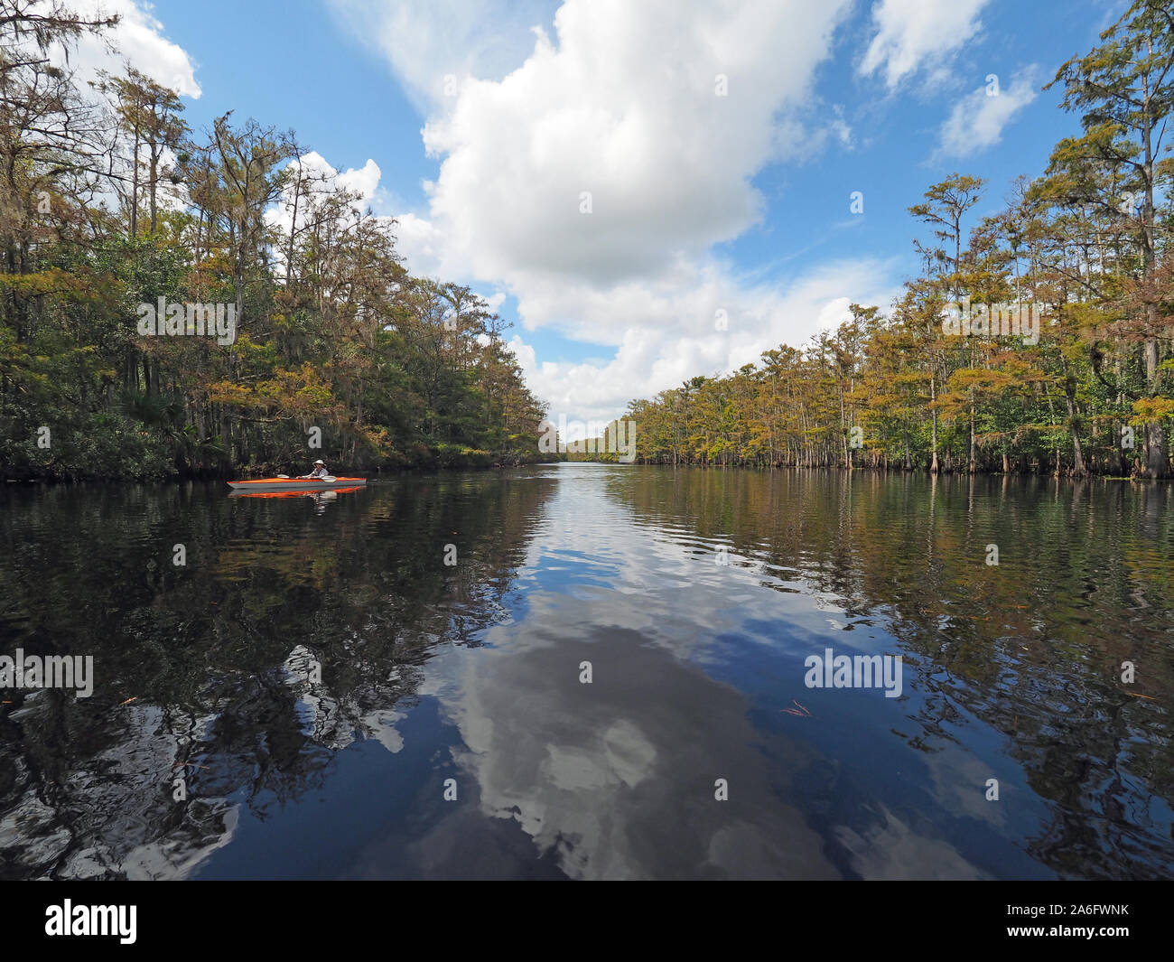 Fisheating Creek, Florida - September 22, 2018: Woman kayaks on calm water amidst reflected clouds and bald cypress trees in autumn. Stock Photo
