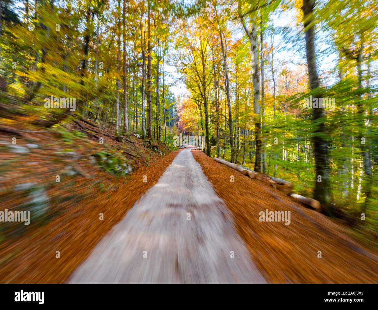 Fast driving through forest country-side countryside countryroad road intentionally blurry speeding blur unsharp Stock Photo