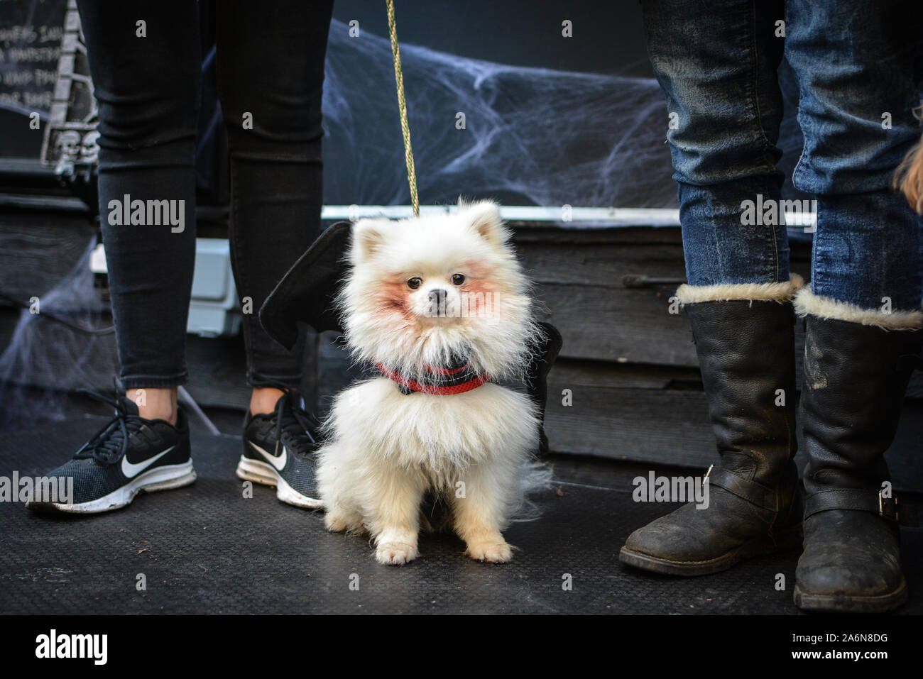 Halloween Chiesa.Halloween Dog Extravaganza High Resolution Stock Photography And Images Alamy