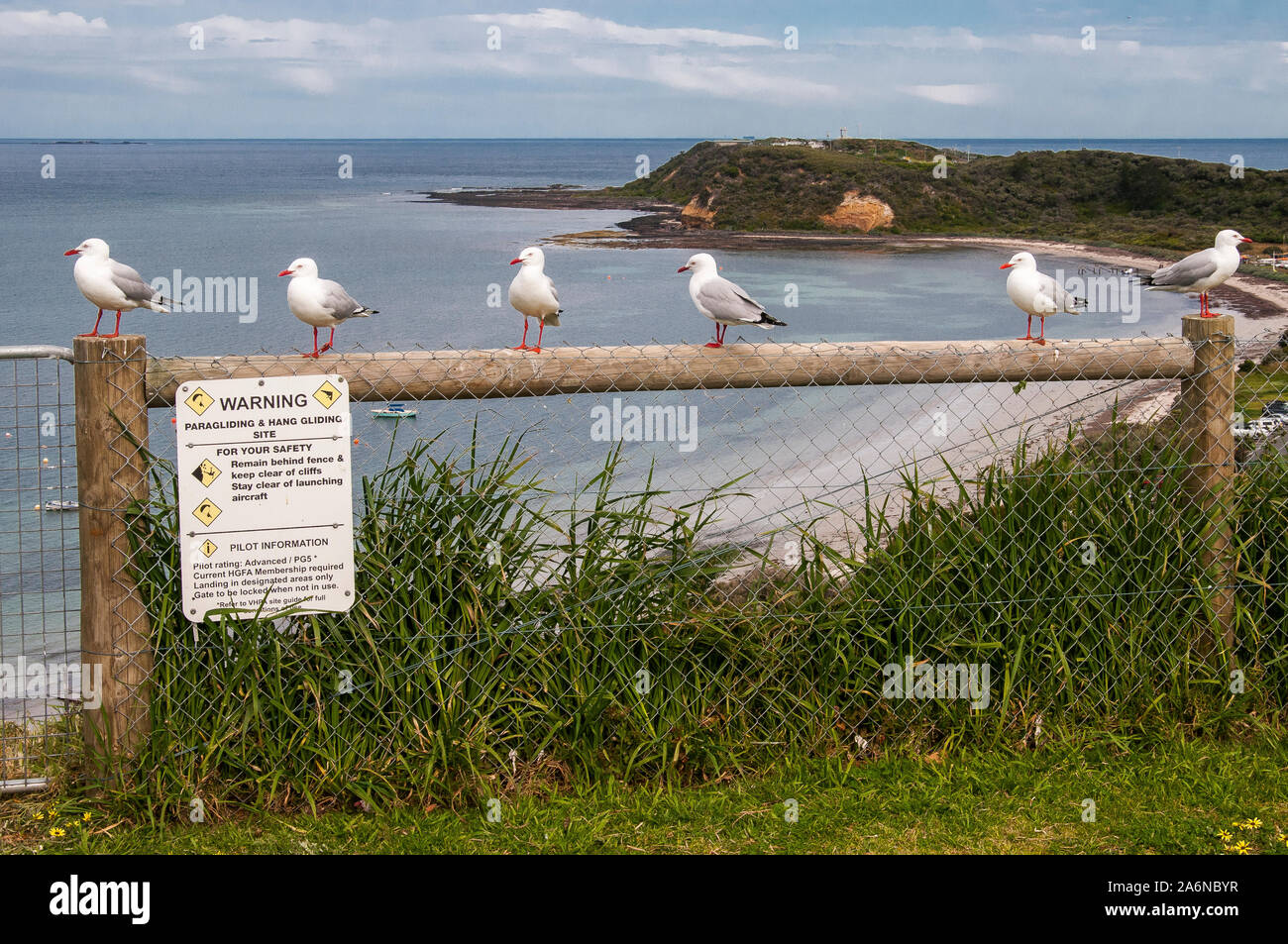 Nonchalant seagulls disregard safety warnings at a clifftop hang gliding and paragliding site on Western Port Bay, outside Melbourne, Australia Stock Photo