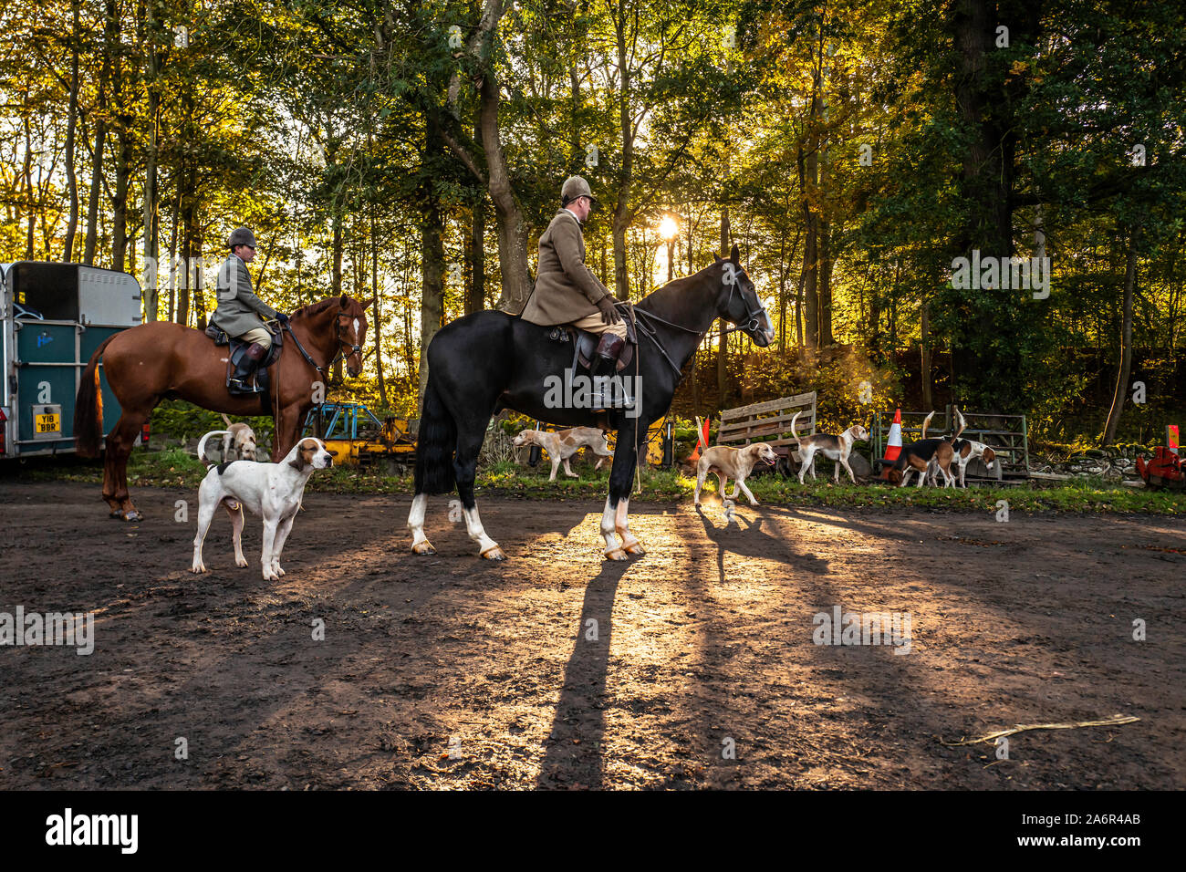 Floors Castle, Kelso, Scottish Borders, UK. 28th October 2019. The Duke of Buccleuch foxhounds flush foxes to guns in the grounds of the Floors Castle at Kelso, home to the Duke of Roxburghe. Credit: Chris Strickland / Alamy Live News Stock Photo