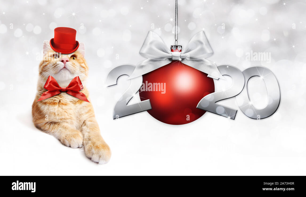 2020 Happy New Year Number Text With Funny Magic Ginger Cat