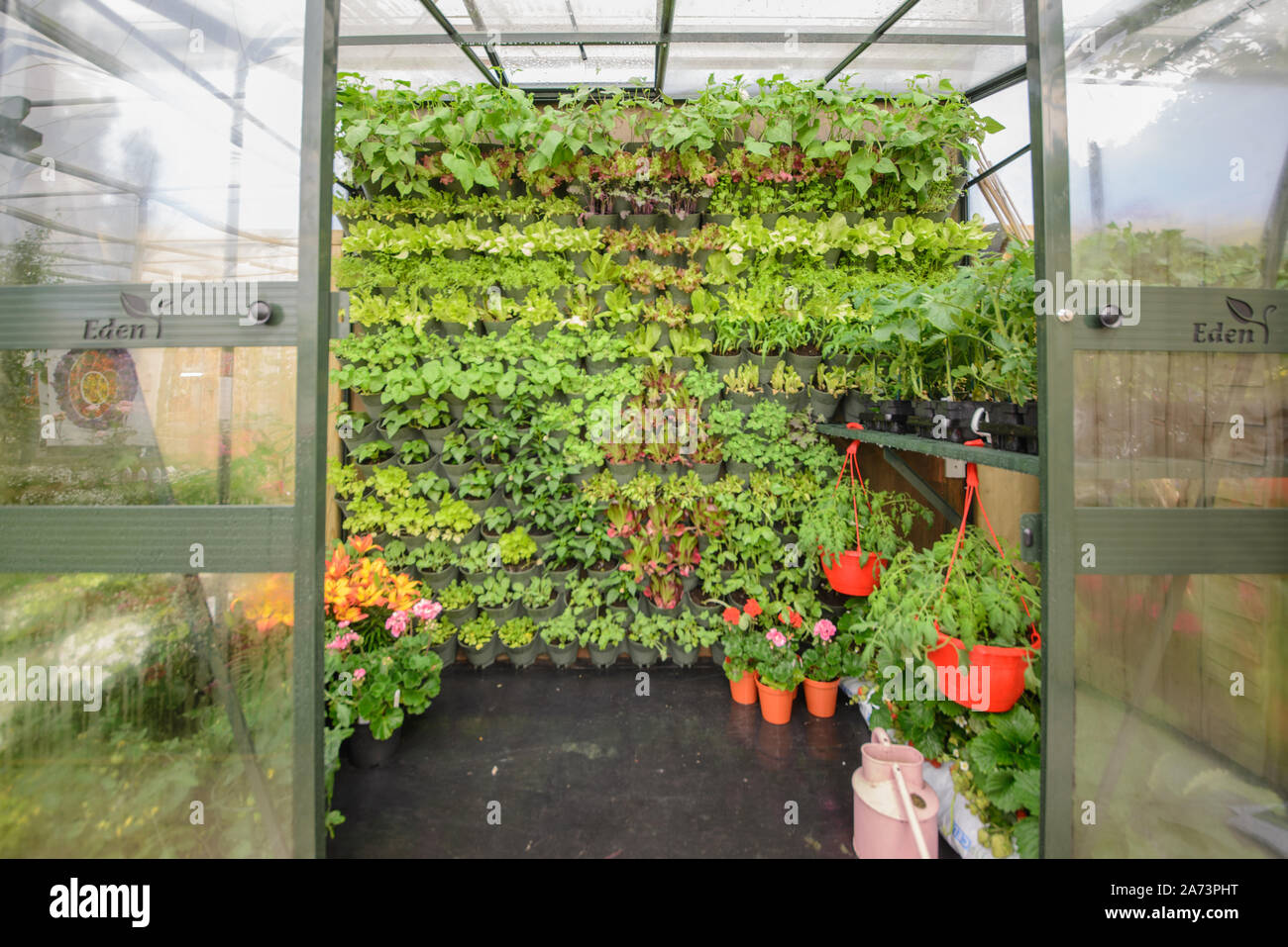 Green wall / vertical gardening Stock Photo