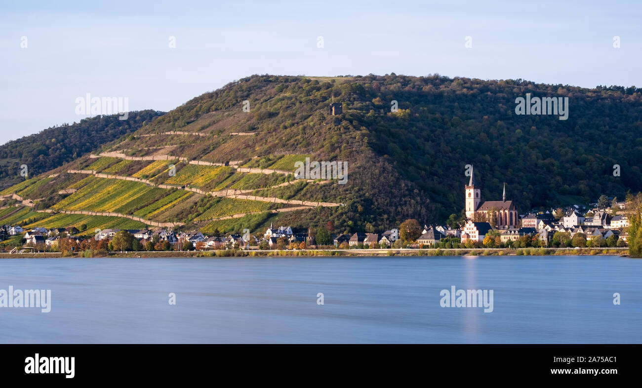 Terraced vineyards along Rhine at Lorch, Germany Stock Photo