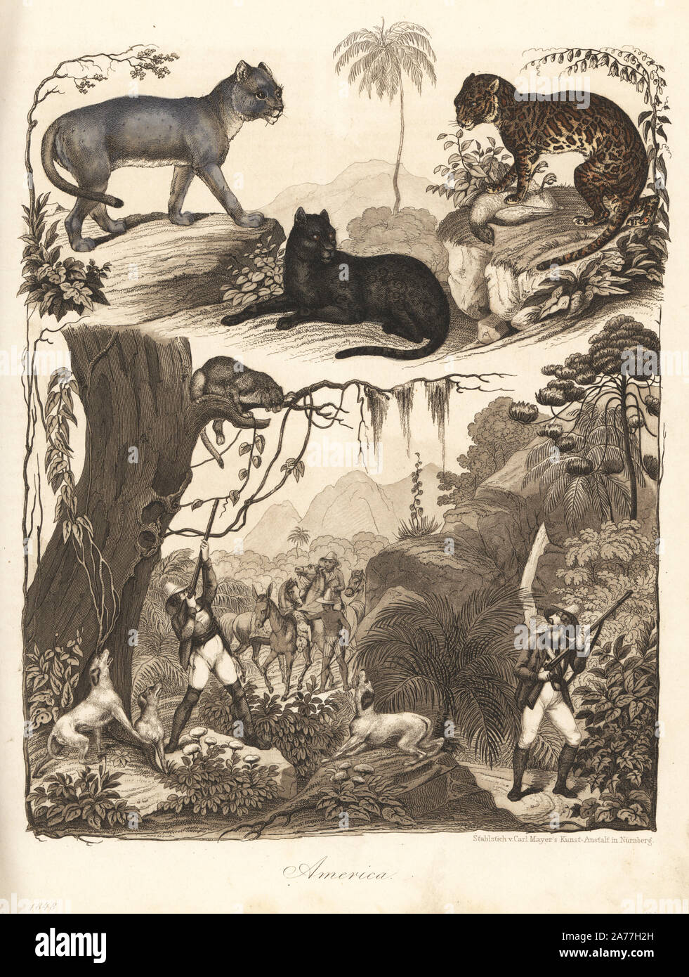 puma 1848