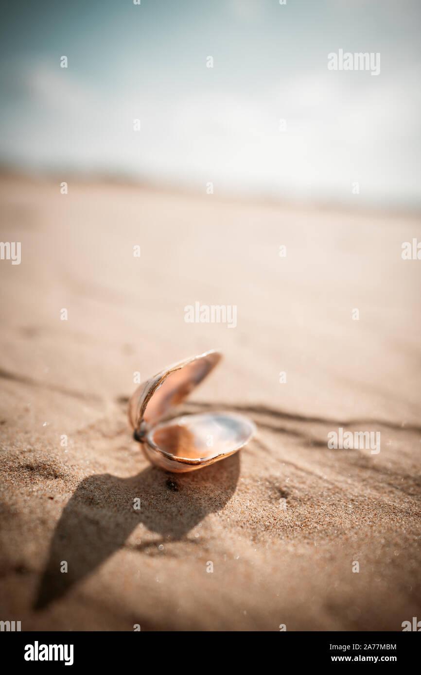 Shell on a Sand Dune in the Desert Stock Photo