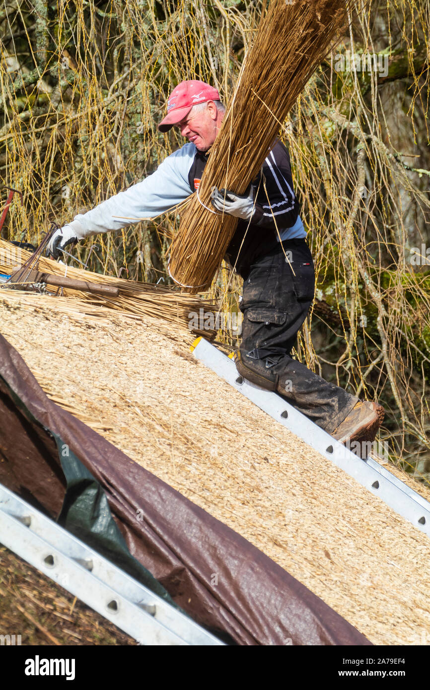 Traditional craftwork employed in thatching the old barn at The Garden House, Buckland Monachorum, Devon Stock Photo