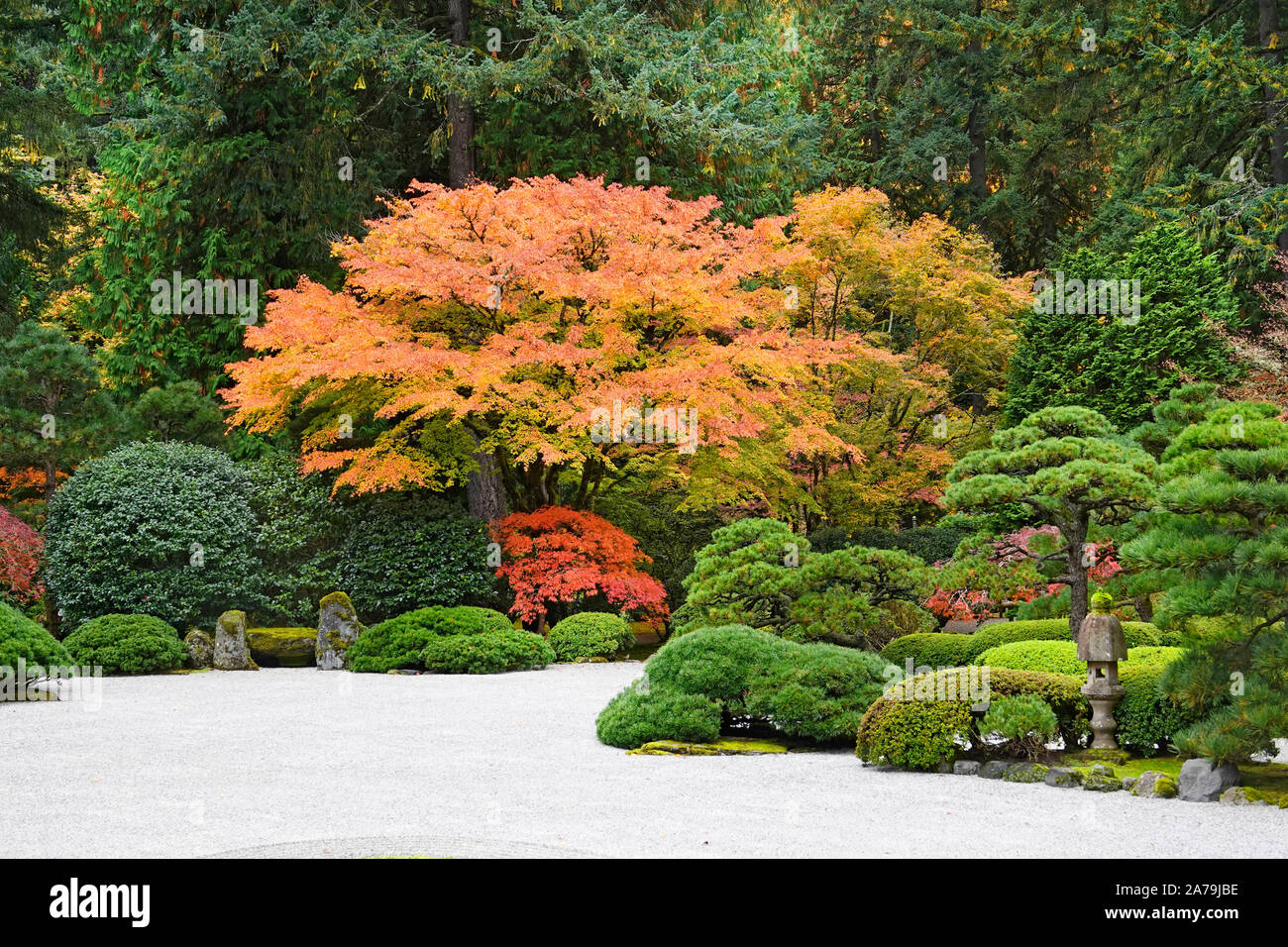 Maple trees and other exotic deciduous trees turning yellow and red in the world famous Japanese Gardens in Portland, Oregon, in Autumn. Stock Photo