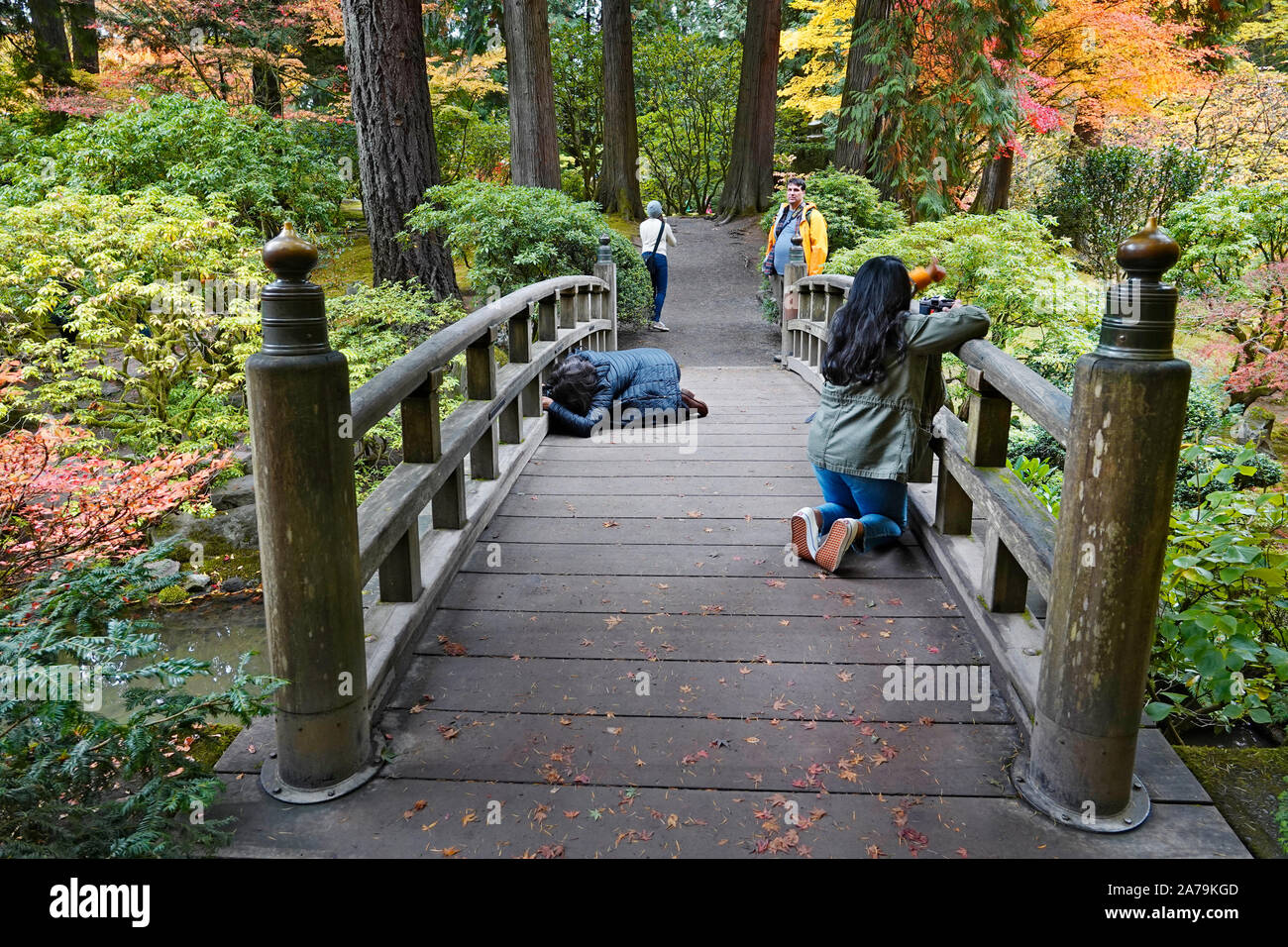 Photographers photographing the Maple trees and other exotic deciduous trees turning yellow and red in the world famous Japanese Gardens in Portland, Stock Photo