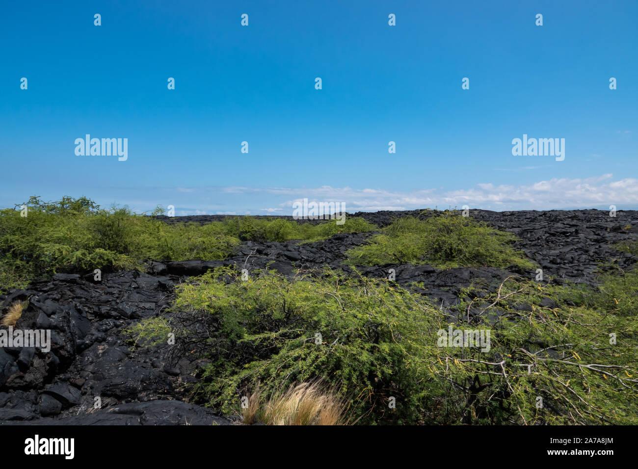 Pahoehoe Lava Field on Hawai'i Stock Photo