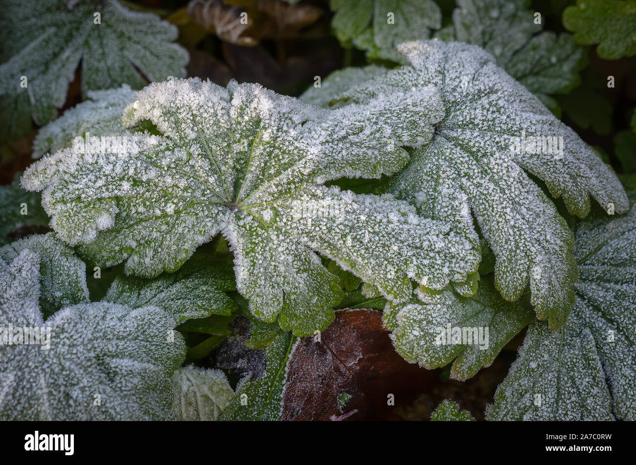 The frost warns of the arrival of winter. Stock Photo
