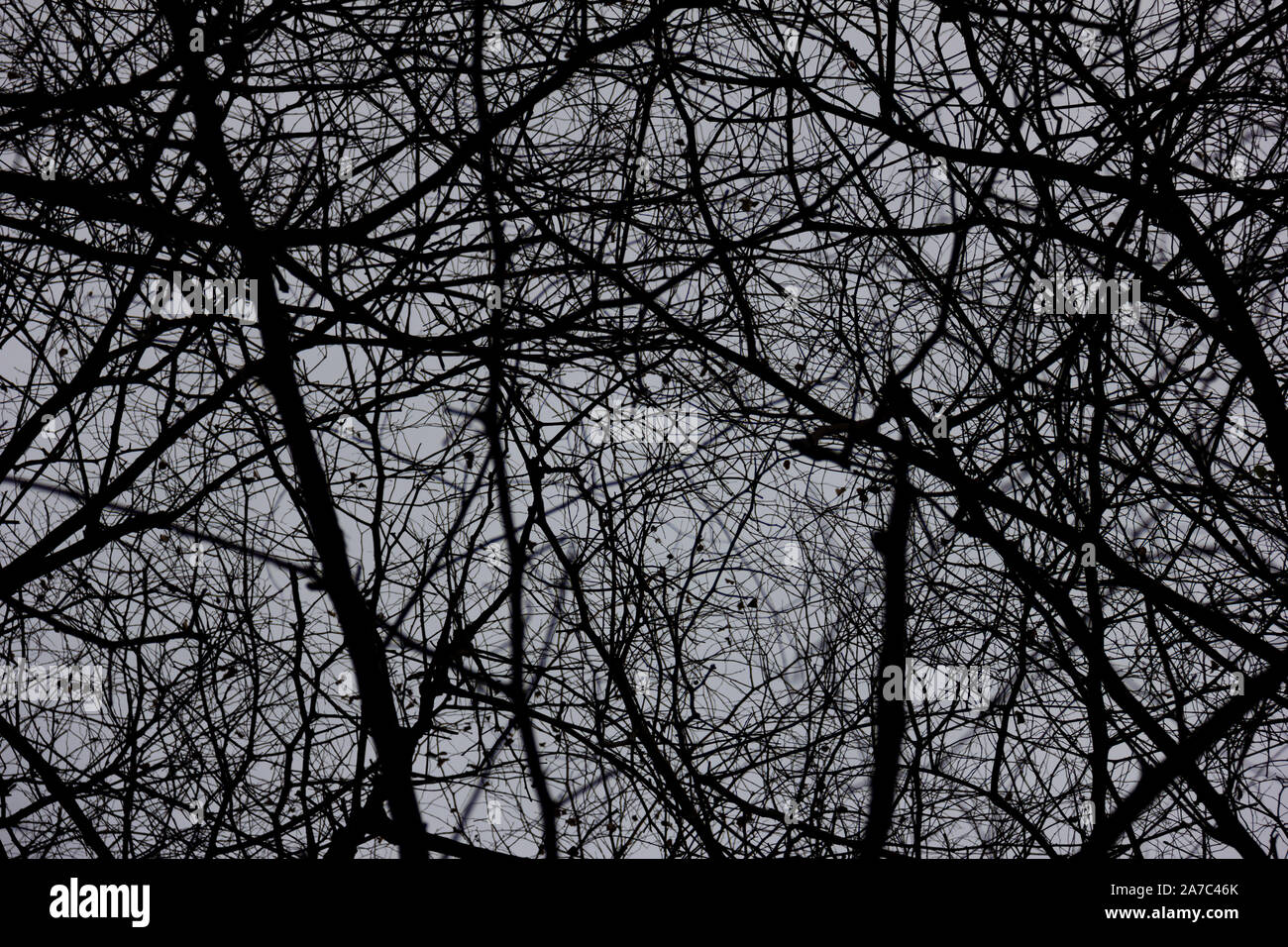 Scary Tree Silhouette High Resolution Stock Photography And Images Alamy