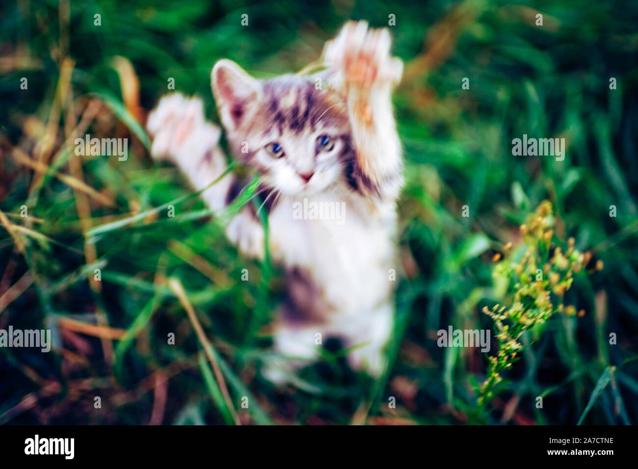 Cat Attack High Resolution Stock Photography And Images Alamy