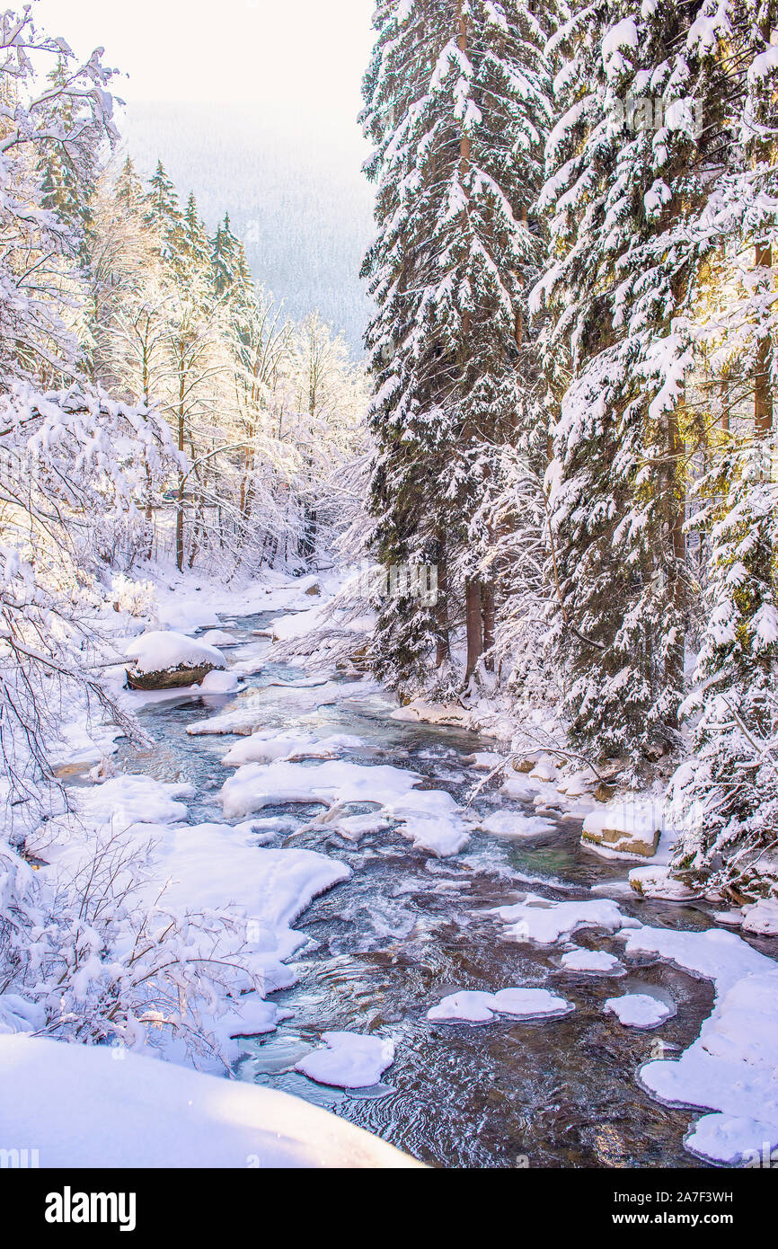Mountain stream, river in winter time, snow, trees and water in a sunshine, polish - czech frontier close to Spindleruv Mlyn. Stock Photo