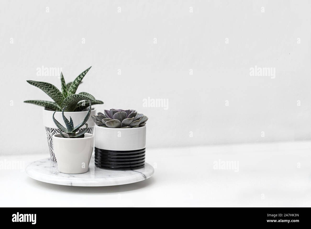 Potted succulent plants with a white background Stock Photo