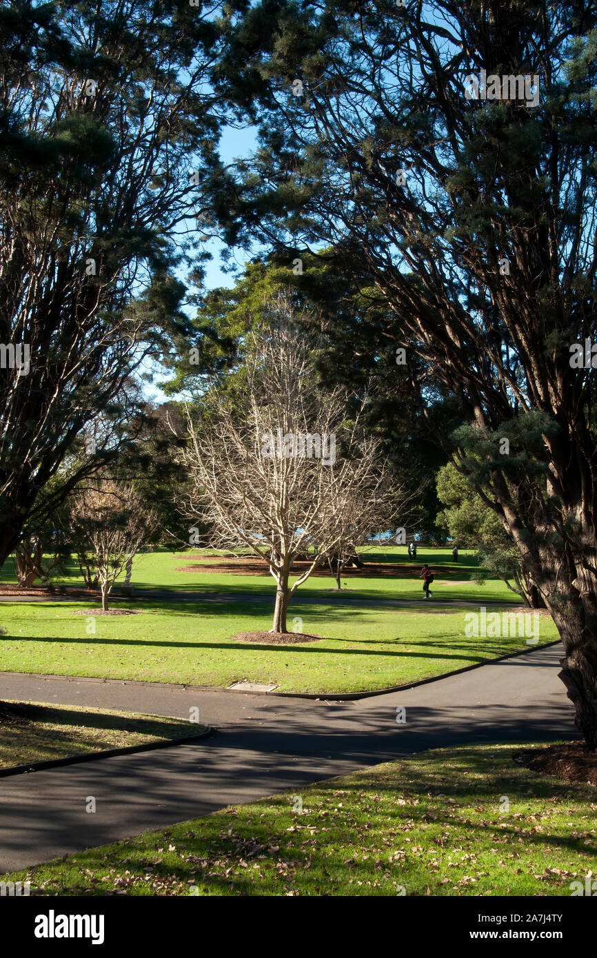 Sydney Australia Winter Landscaped Park View With A Ginkgo Biloba