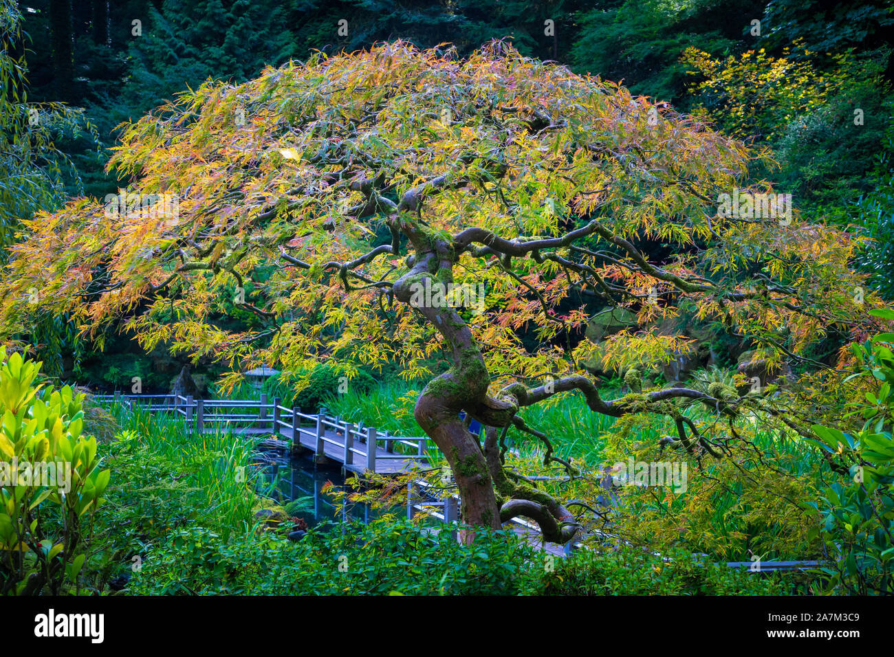 The Portland Japanese Garden is a traditional Japanese garden occupying 12 acres, located within Washington Park in the West Hills of Portland, Oregon Stock Photo
