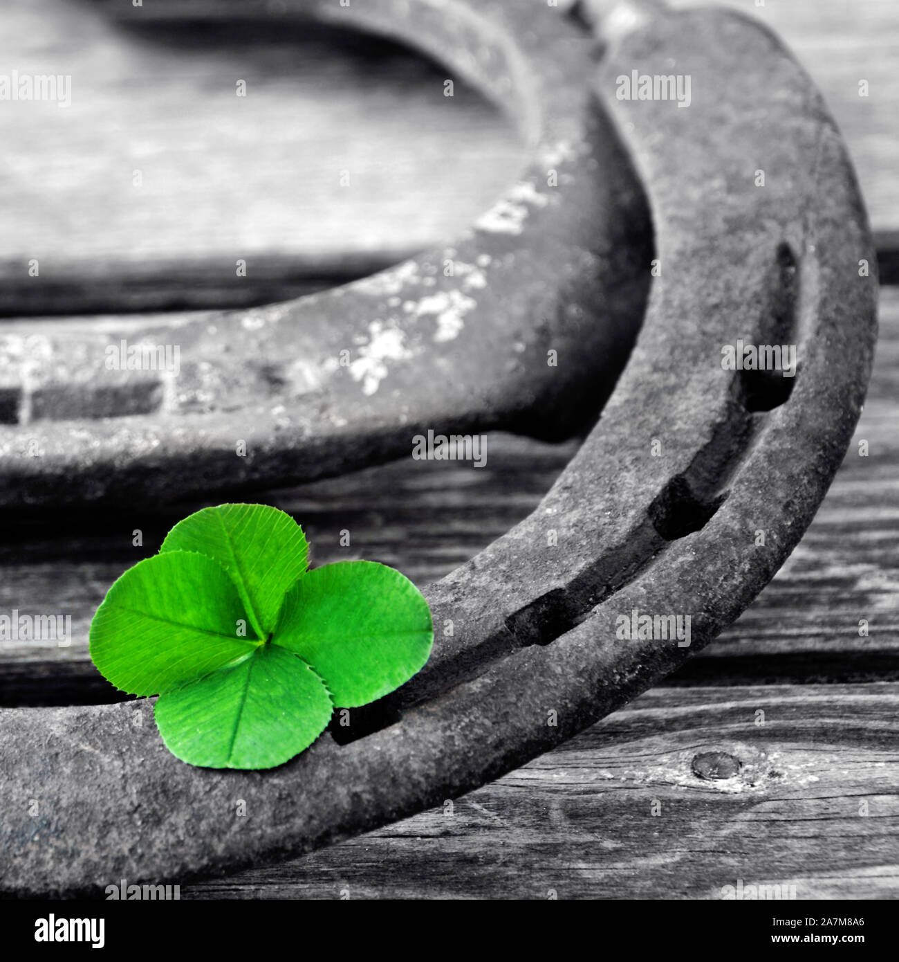 Horseshoe with lucky clover on wood background Stock Photo