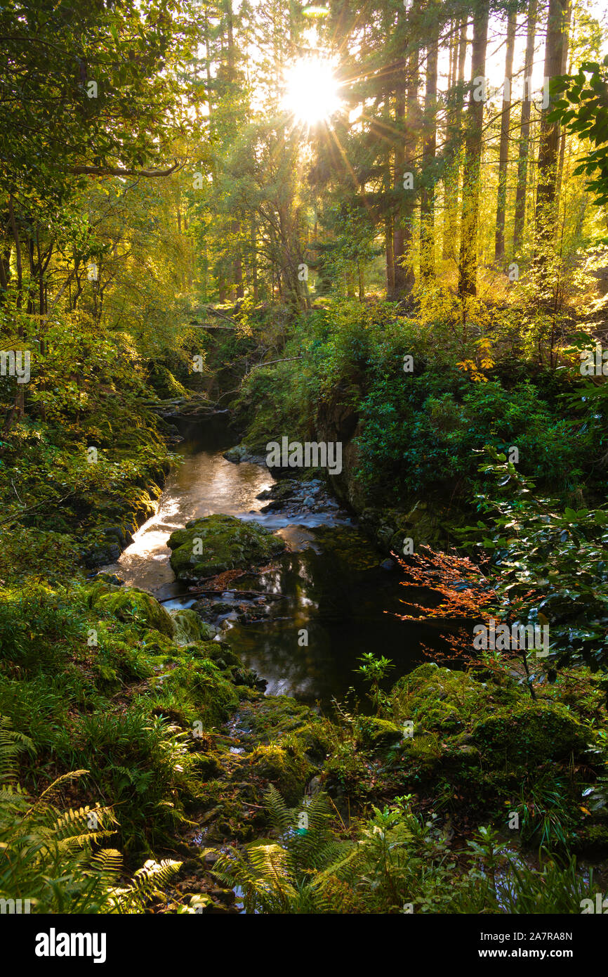 Tollymore Forest Park in Bryansford Northern Ireland Stock Photo