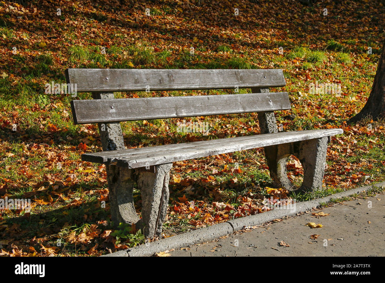 Wooden Bench In An Autumn Park Stock Photo 331829482 Alamy