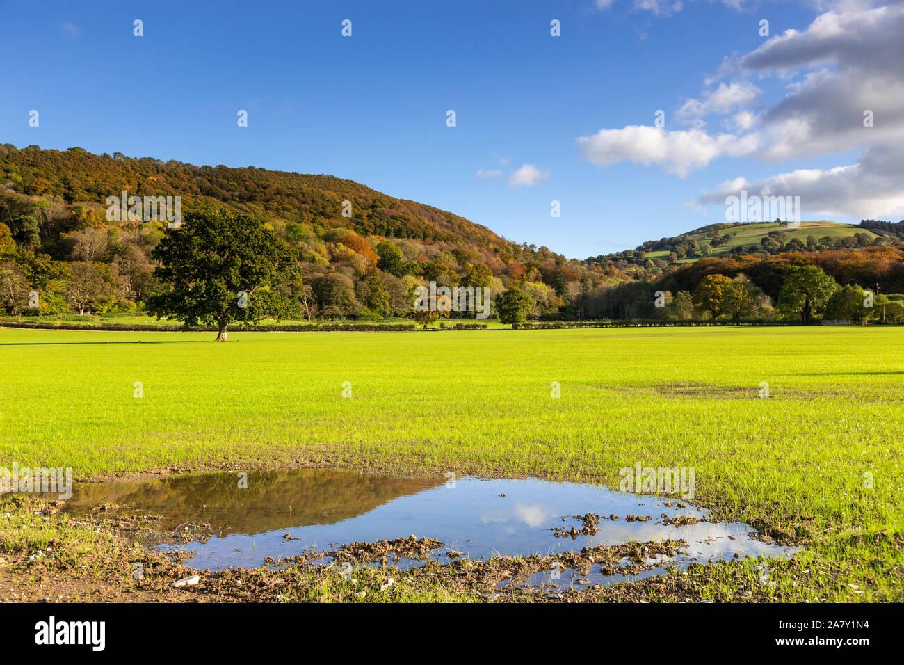 Waterlogged field near Llanwrst, North Wales Stock Photo