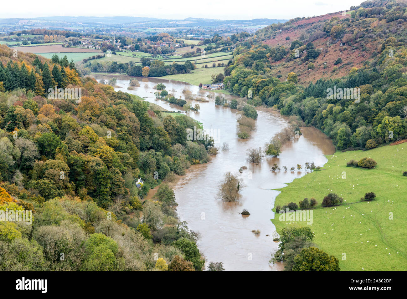 The River Wye in flood  below Coppett Hill on 28.10.2019 viewed from Symonds Yat Rock, Herefordshire UK - The flooding was due to heavy rain in Wales. Stock Photo