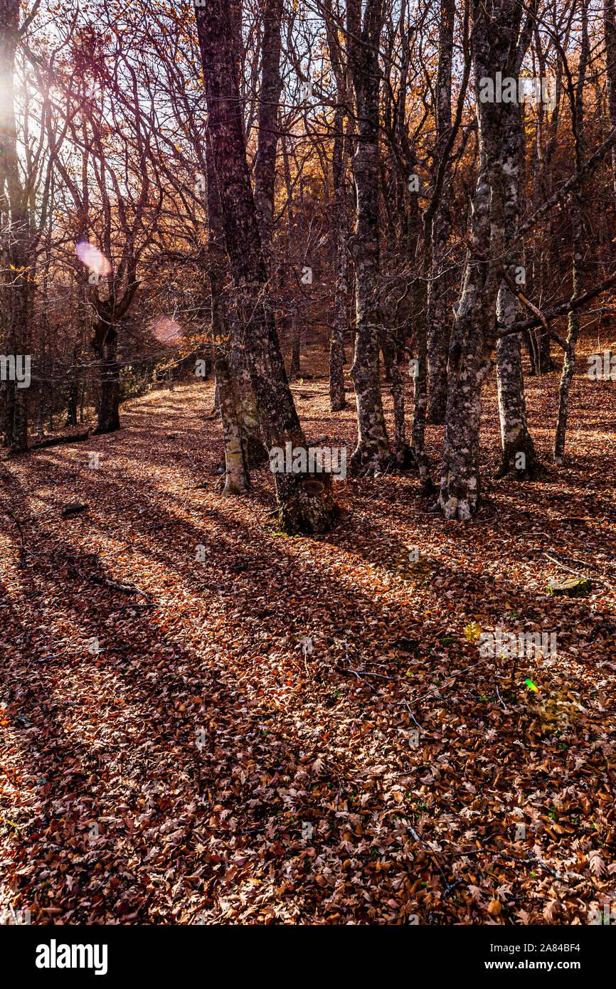 Nature: Autumn in Montejo de la Sierra beech, Madrid. Stock Photo