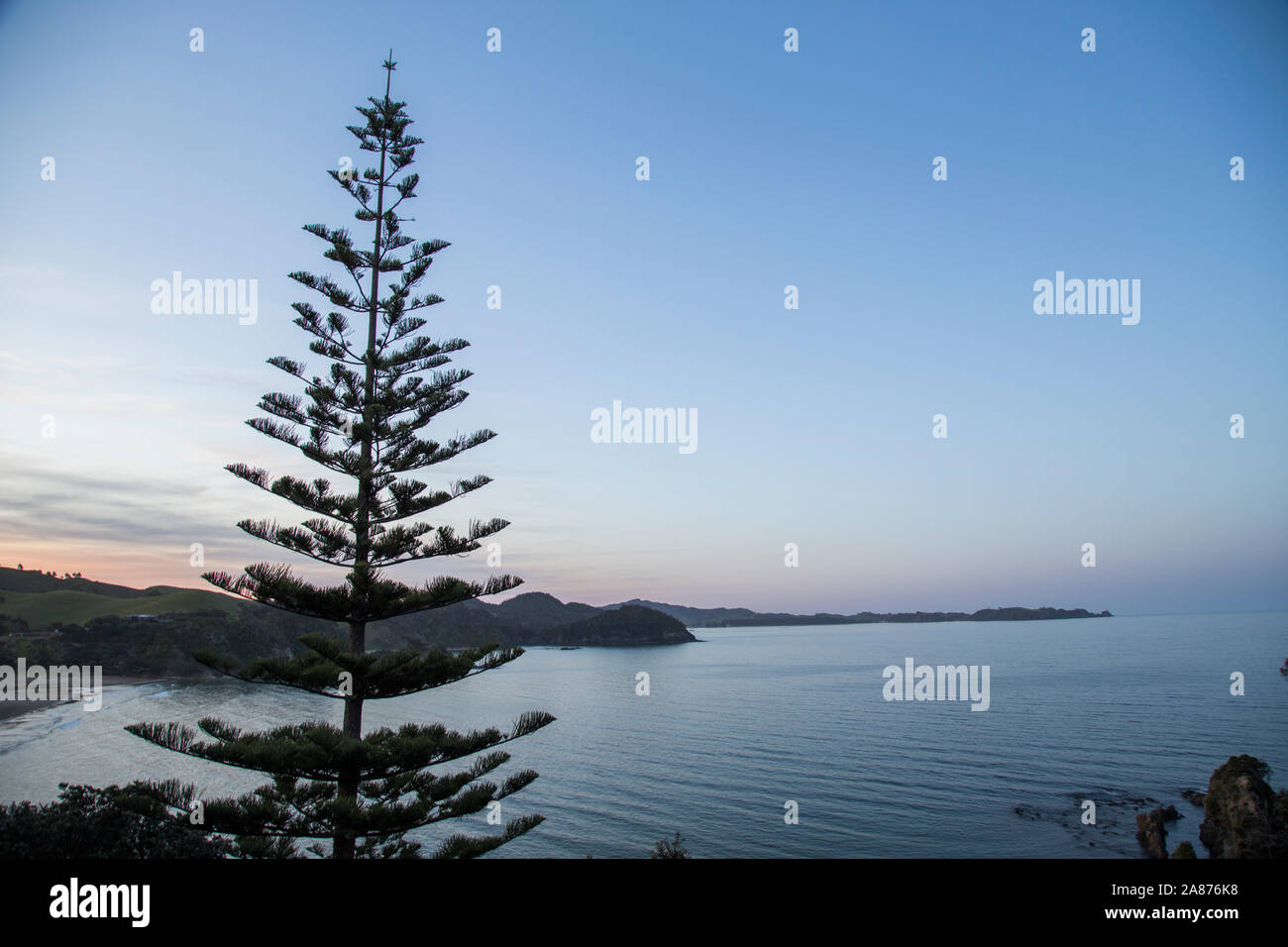 Evening view looking down into Sandy Bay towards the north with Whananaki in distance. Calm day on usually big surf beach. Norfolk pine, native bush. Stock Photo