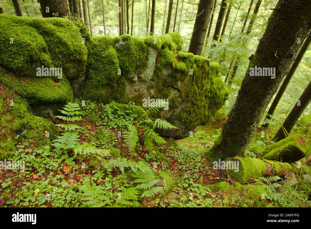 Wehraschlucht, Bannwald,  autumn, Black Forest, Germany Stock Photo