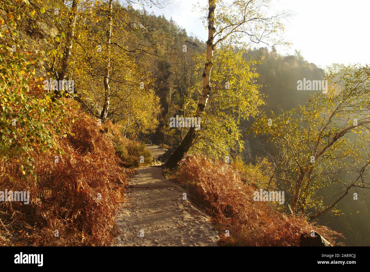 Trees in morning light, Heilige Stiege, autumn, Sächsische Schweiz, Germany Stock Photo