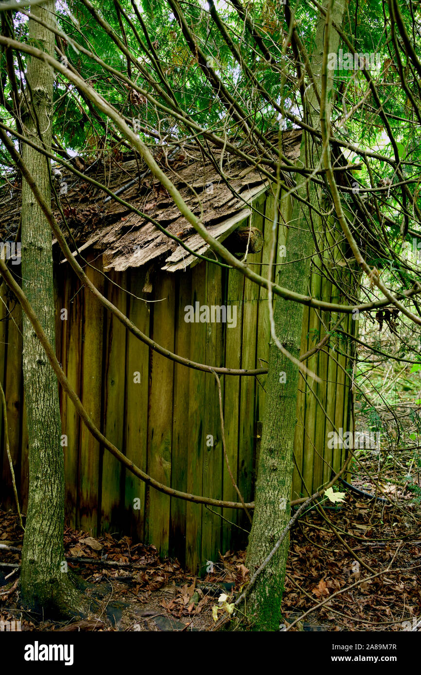 A vertical image of an old shed in among the growing trees on Vancouver Island British Columbia Canada. Stock Photo