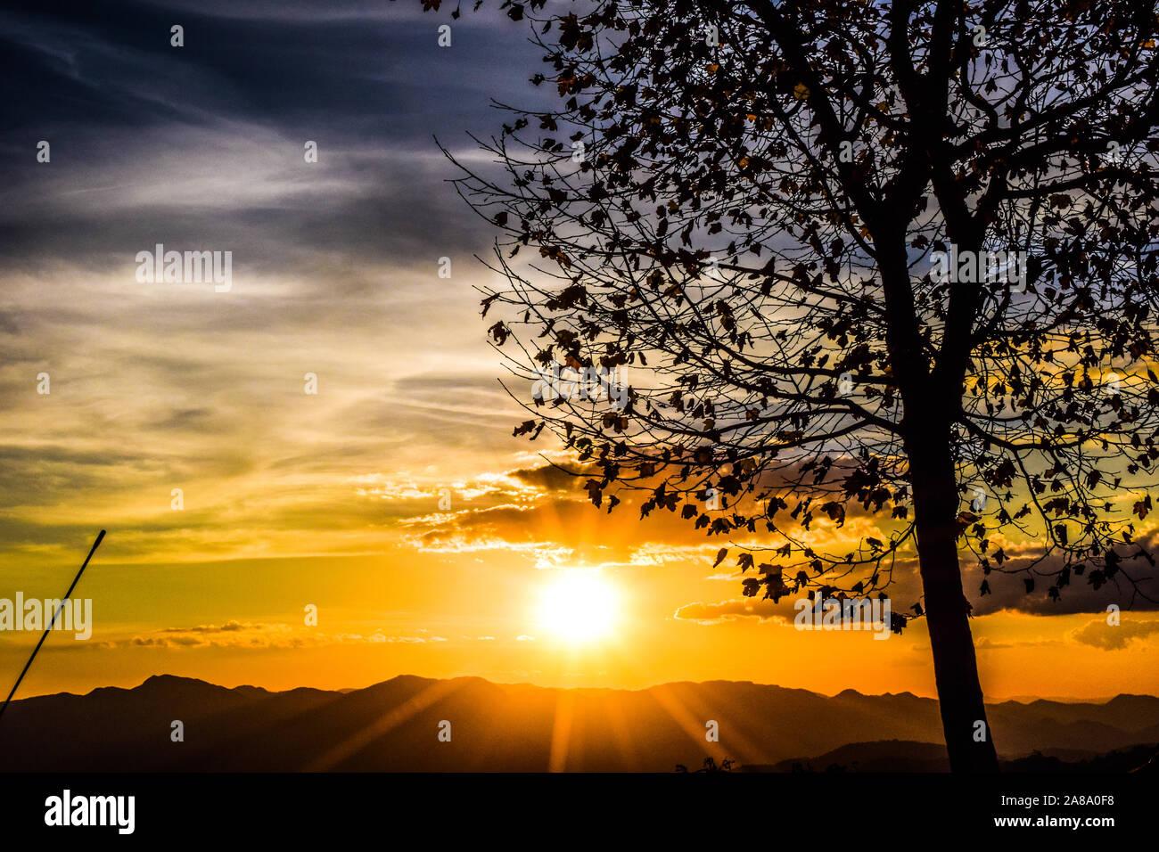 beautiful sunset with tree Stock Photo
