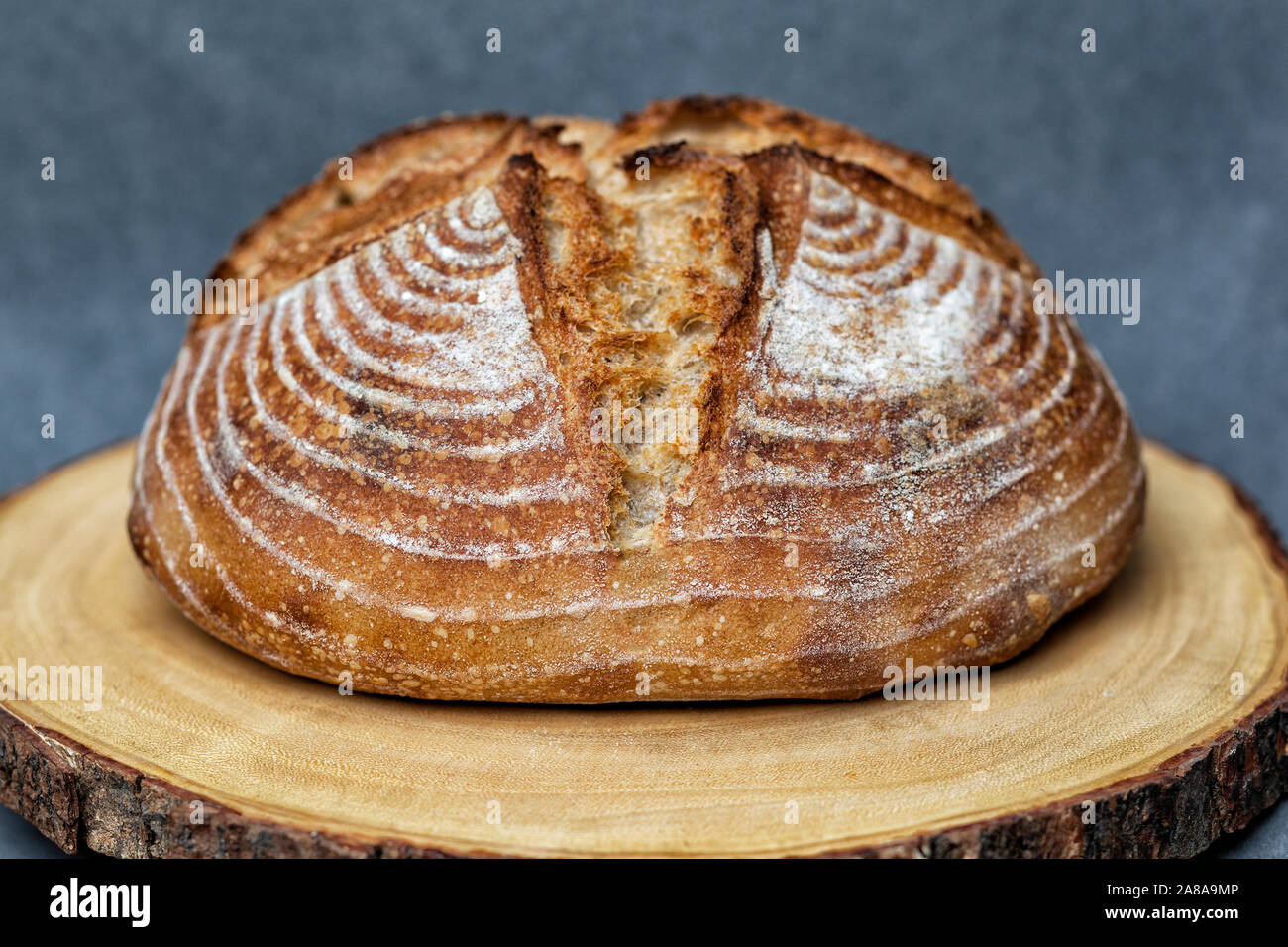 Artisan loaf of traditional Homemade sourdough Boule bread with crust on a wooden board with grey background Stock Photo