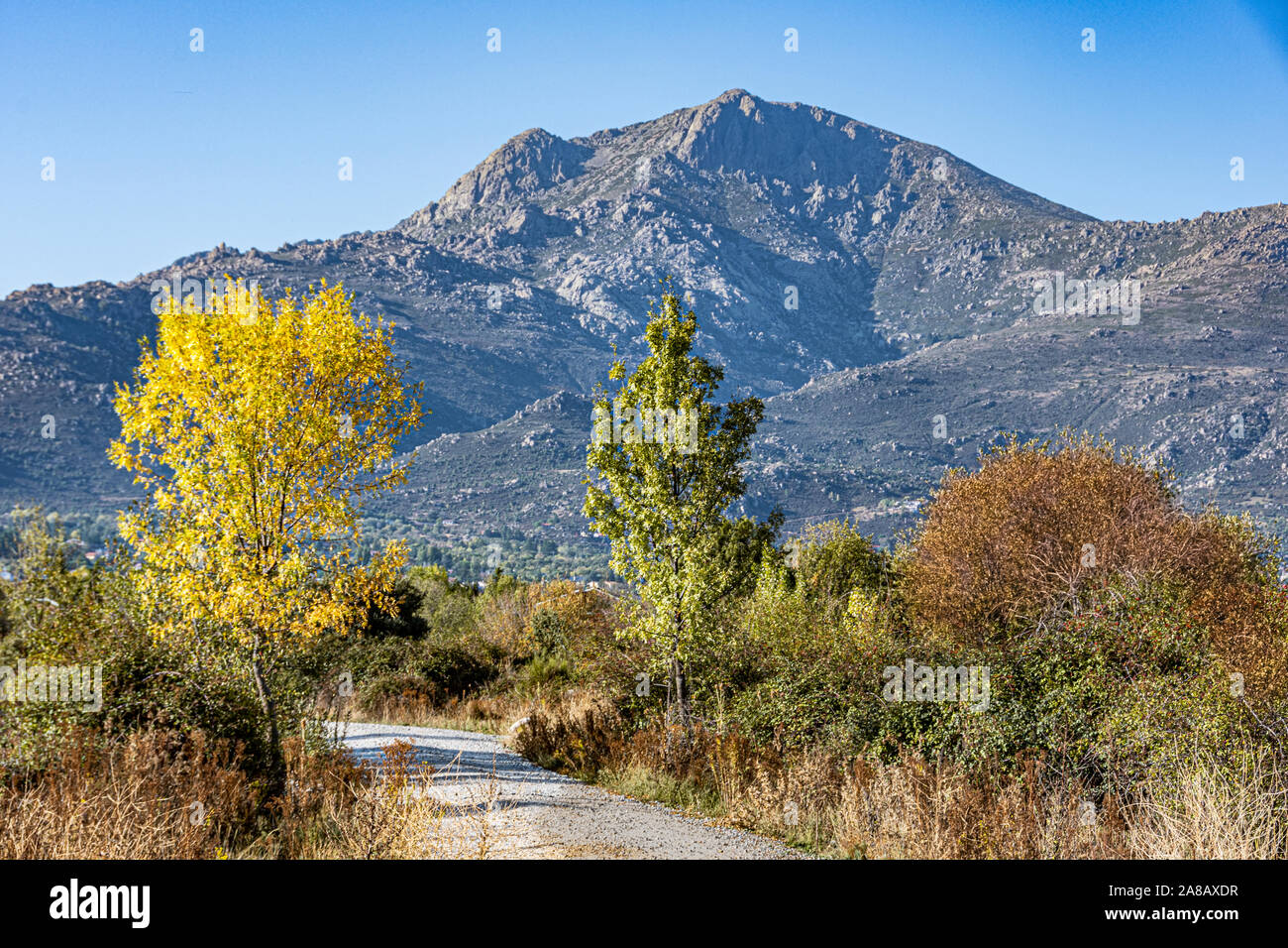 Trees with fall foliage in the Sierra de Guadarrama. madrid Spain Stock Photo