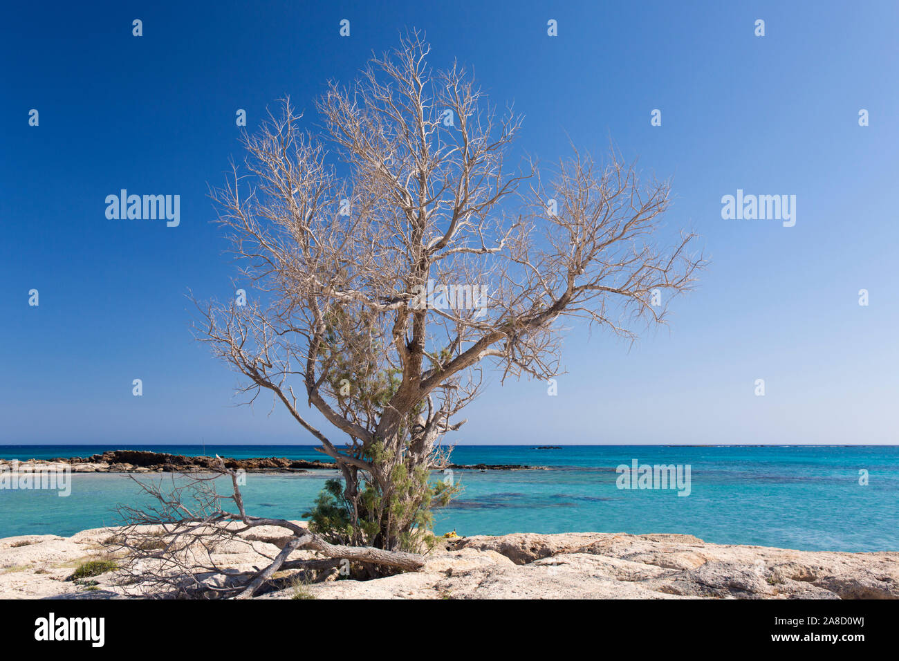 Elafonisi, Chania, Crete, Greece. Lone tree on rocky outcrop above the clear turquoise waters of Vroulia Bay. Stock Photo