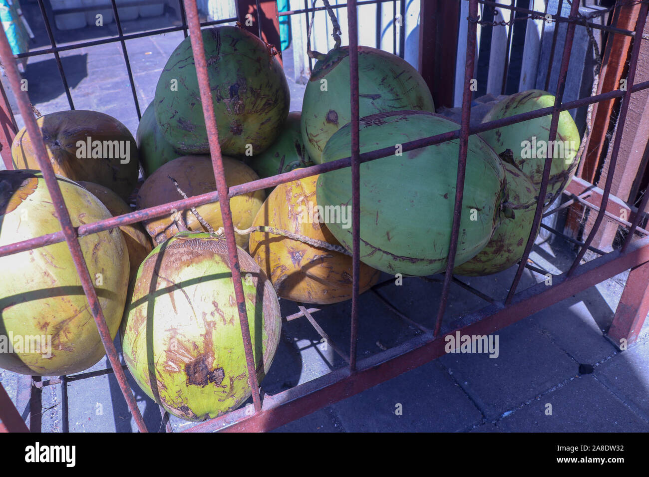 Pile of fresh green coconuts in wire cage. Young coconuts. Market hall on Bali island in Indonesia. Fresh drink sale. Healthy and refreshing energy. Stock Photo